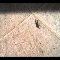 Ejemplos de la fuerza de las hormigas