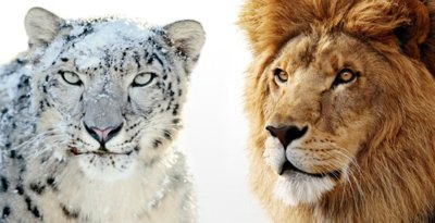 OS X Lion contra Snow Leopard, ¿qué felino es el más rápido?