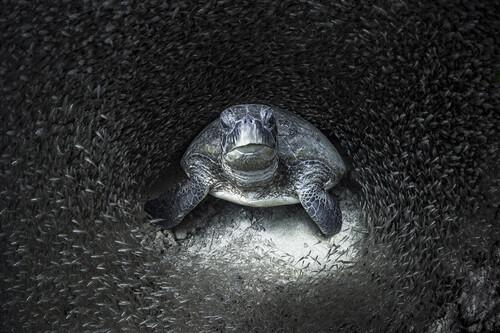 Tortugas, peces de cristal, tiburones, medusas y otras sugerentes fotos ganadoras de los 'Ocean Photography Awards 2021'