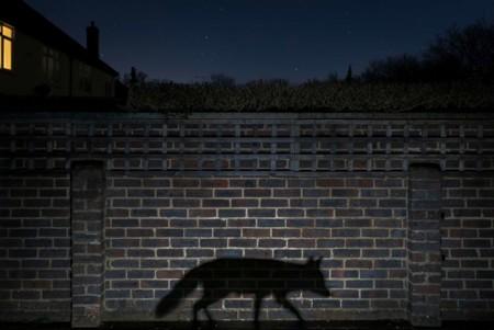 Urban Shadow Walker Richard Peters Uk