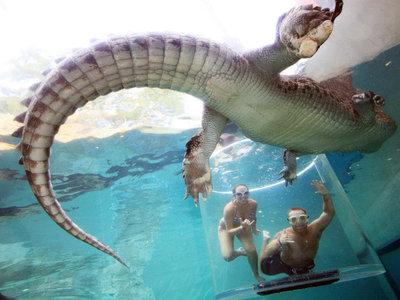 Nadar en una jaula rodeada de enormes cocodrilos redefine el concepto de vacaciones extremas