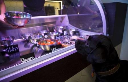 Para las mascotas gourmet