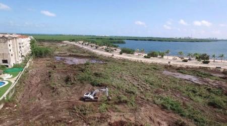 La suspensión lograda por niños para proteger el manglar Tajamar en Cancún no tiene efecto