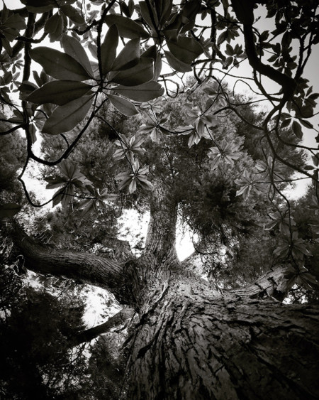 060 Concepcion Munoz Trees 2nd