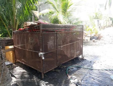 Rescatan A Jaguar Dentro De Una Casa En Tulum Quintana Roo Profepa 3