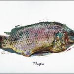 La piel de tilapia puede ser utilizada en la cura de quemaduras
