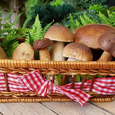 7 tipos de hongos y champiñones poderosos y sus beneficios a la salud