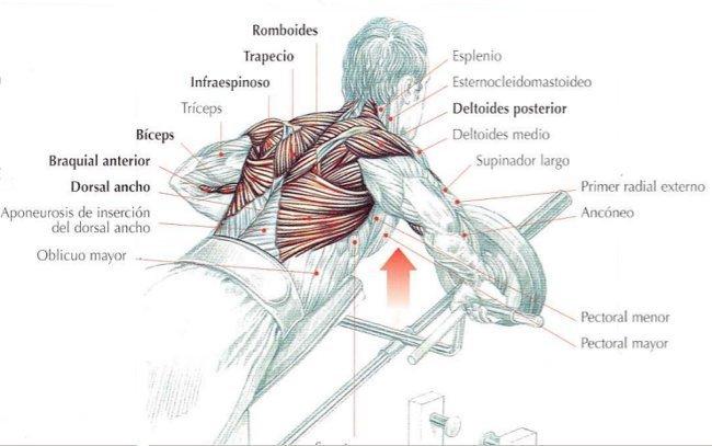Las cicatrices sobre la espalda de las anguillas el tratamiento