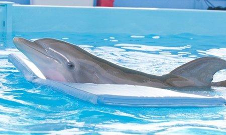 Taquilla USA: El delfín es ahora el rey