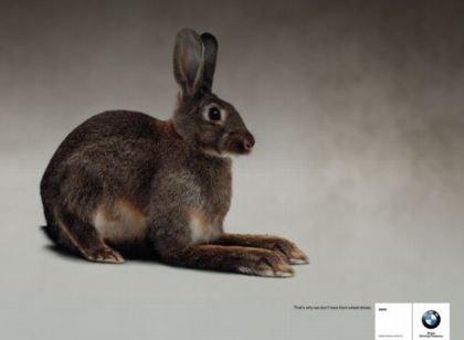 El conejo de BMW