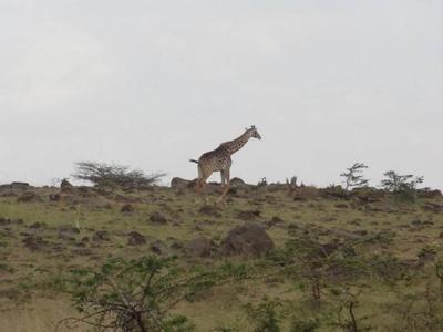 Visado único para visitar Kenia, Ruanda y Uganda