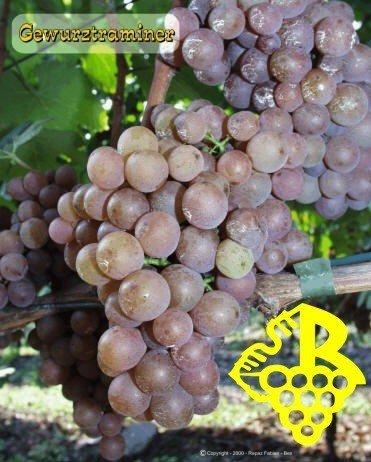 Vino de Alsacia: Gewurztraminer