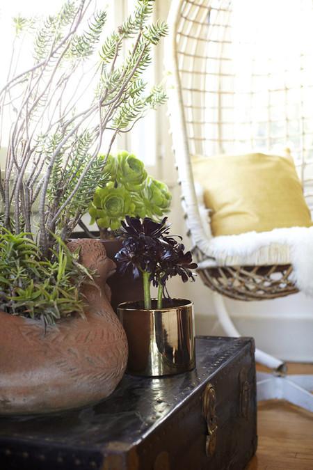 Plantas suculentas para decorar