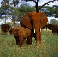 Los 10 mejores destinos para ver vida salvaje en Africa (IX)