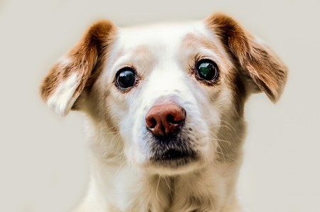 Una startup quiere usar terapias génicas para rejuvenecer a nuestras mascotas y después hacerlo con humanos