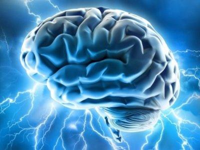 ¿La evolución nos encamina a tener un cerebro cada vez más pequeño?