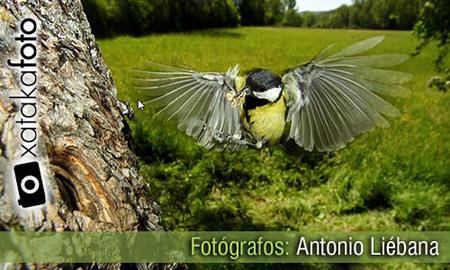 Fotógrafos: Antonio Liébana