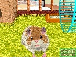 Cuida un hamster en la NDS