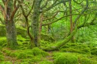 En el mundo cada vez hay más árboles, no menos