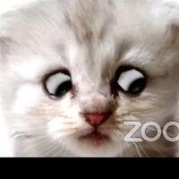 I'm Not a Cat, o cómo un abogado que no sabía manejar filtros nos dio la llamada de Zoom perfecta