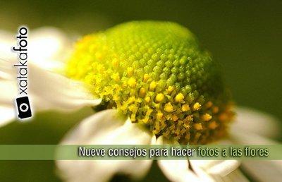 Nueve consejos para hacer fotografías a las flores