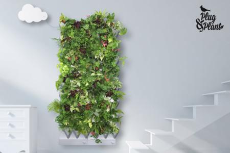 Medium Plug Plant Smart Indoor Garden