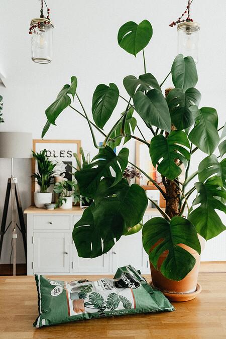 Trucos Para Regar Las Plantas 2