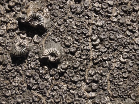 Fossil 1969912 960 720