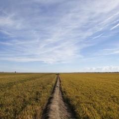 Foto 10 de 14 de la galería la-produccion-de-los-cereales-con-base-de-arroz en Vitónica