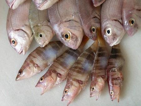 pescados susceptibles de contener anisakis