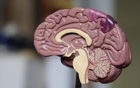 Logran revertir la pérdida de memoria del Alzheimer en ratones gracias a una novedosa terapia génica