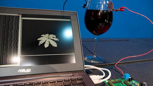 Intel Wine Processor