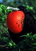 Los pájaros tararean los tonos y melodías móviles