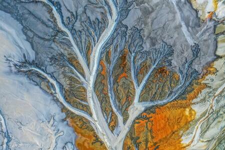 56181 - Tree - Manuel Enrique González Carmona