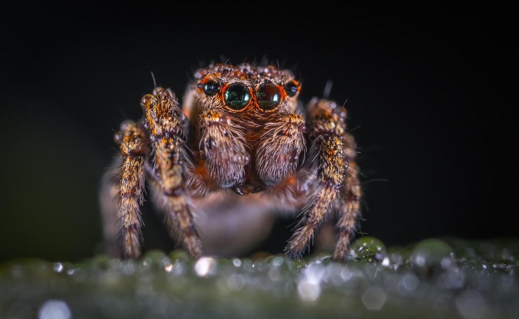 Casi todas las curiosidades que hay que conocer encima las arañas en su únicamente artículo