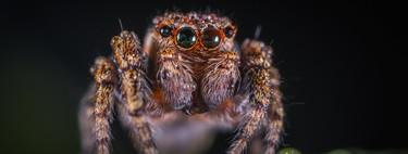 Casi todas las curiosidades que hay que conocer encima las arañas en un únicamente artículo
