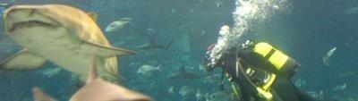 Aquarium de Barcelona: Inmersión con tiburones