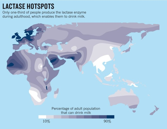 Lactase Hotspots2
