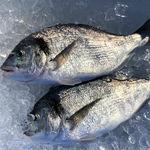 ¿Podremos seguir consumiendo pescado? La acuicultura y la pesca sostenible, dos posibles soluciones