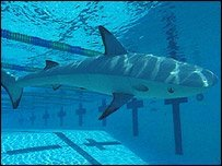 Hydrodome, un acuario para peces robotizados