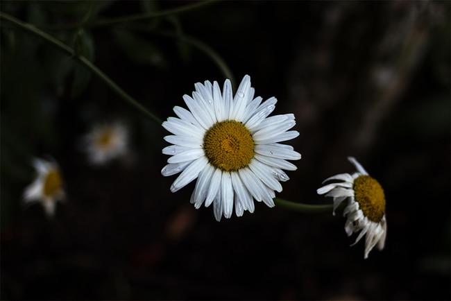 Fotografiar en RAW + JPEG: ventaja e inconvenientes a la hora del post procesado