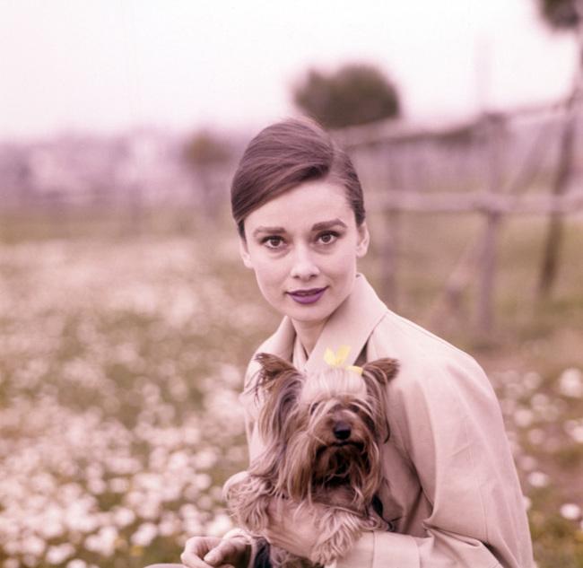 Mr. Famous Audrey Hepburn