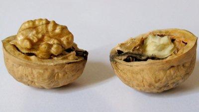 Nueces: los frutos secos con más antioxidantes