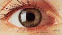 Síndrome de los Ojos Secos