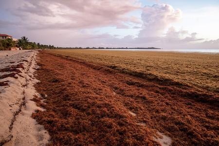 Isla Mujeres ya está libre de sargazo: la Secretaría de Marina dice que en mes y medio todas las playas estarán limpias