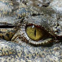 13 cosas que probablemente no sabías sobre los cocodrilos