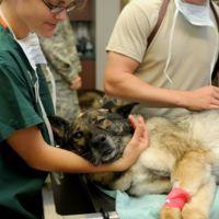 Así es la cirugía estética que hacemos a los animales y que pronto estará prohibida