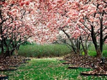 Haz frente a la primavera