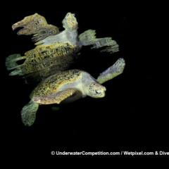Foto 3 de 34 de la galería underwater-competition en Xataka Foto