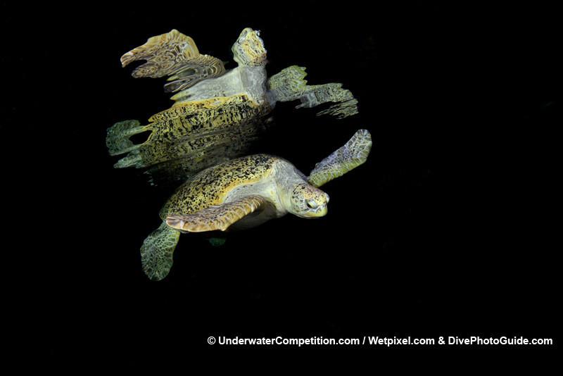Foto de Underwater competition (3/34)
